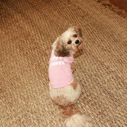 Happy Camper Pet Tee Shirt, Pink, Medium