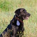 Spectra Shield Flea Tick Medallion, Large
