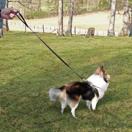Pet Harness - Small, Black