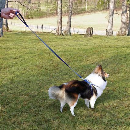 Pet Harness - Small, Blue
