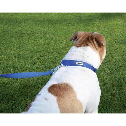 Pet Stuff Pet Collar, Large, Blue